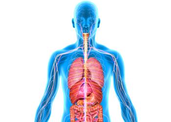 Organs image